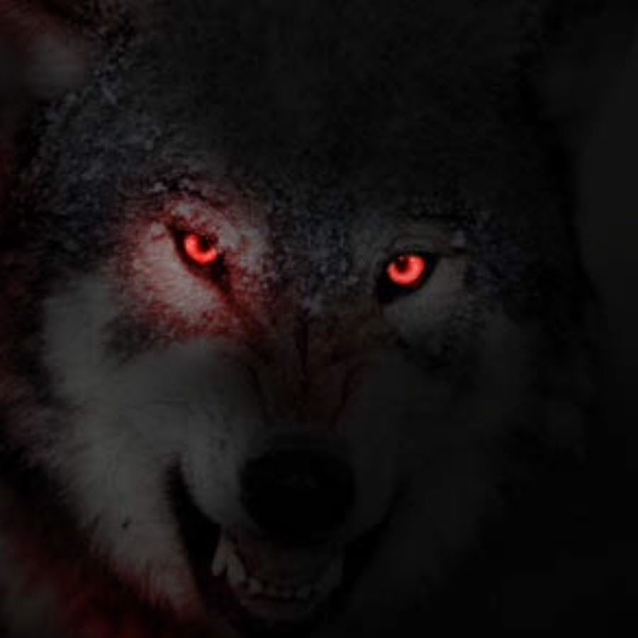 картинки черные волки красными глазами как показалось