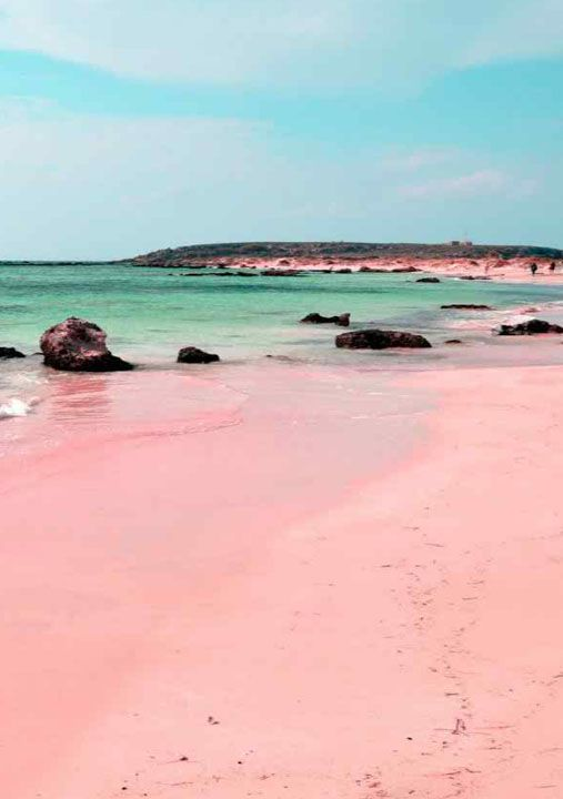 Pink Sand Beach Bahamas Travel George This Has Gotta Be Your Next