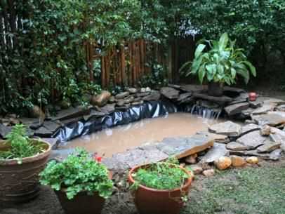8 Things To Consider Before You Install A Pond: Water Garden Basics