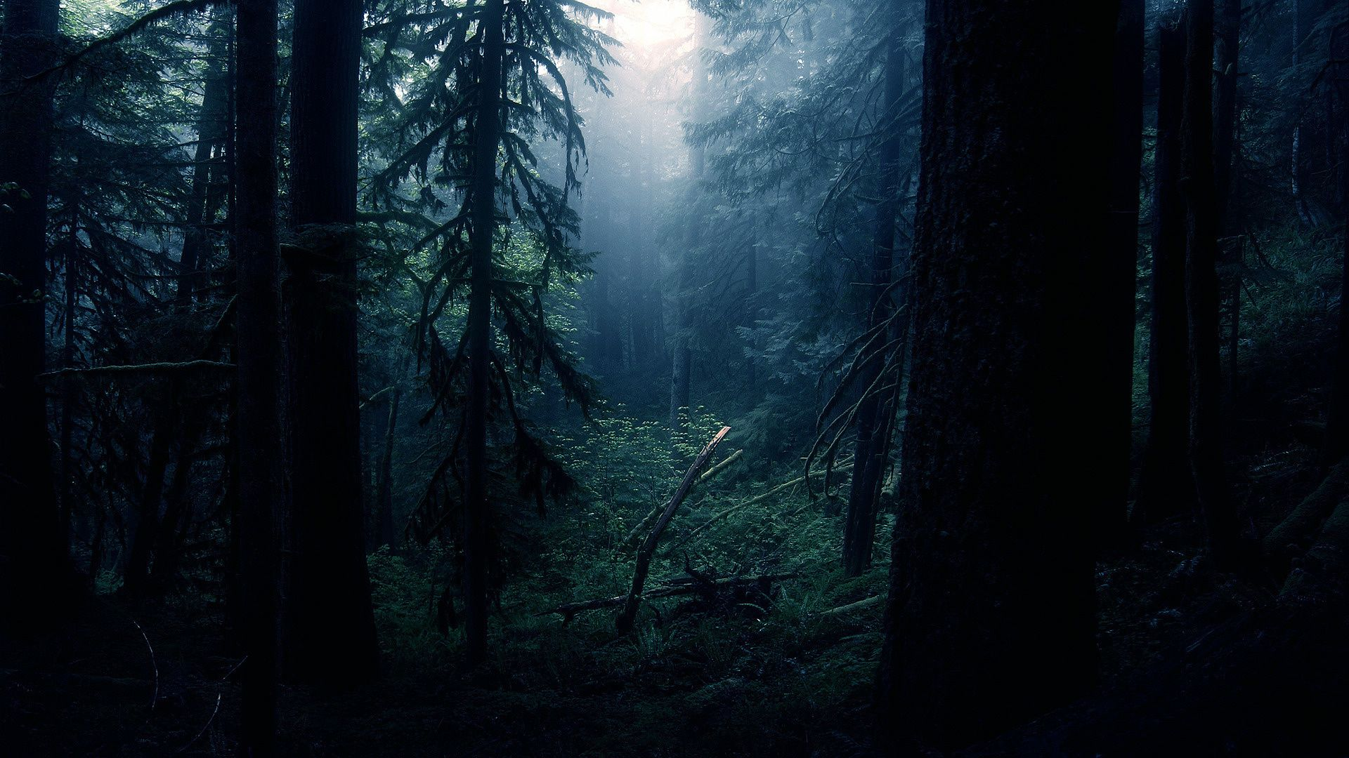 Dark Forest Wallpapers Images | Natures Wallpapers ...