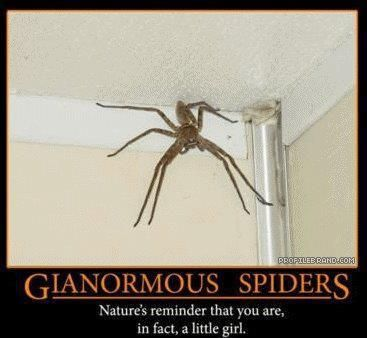"""""""There's a huge spider in my room...Daddy I think you are going to need a bigger shoe"""" ~Sandy Swagger"""