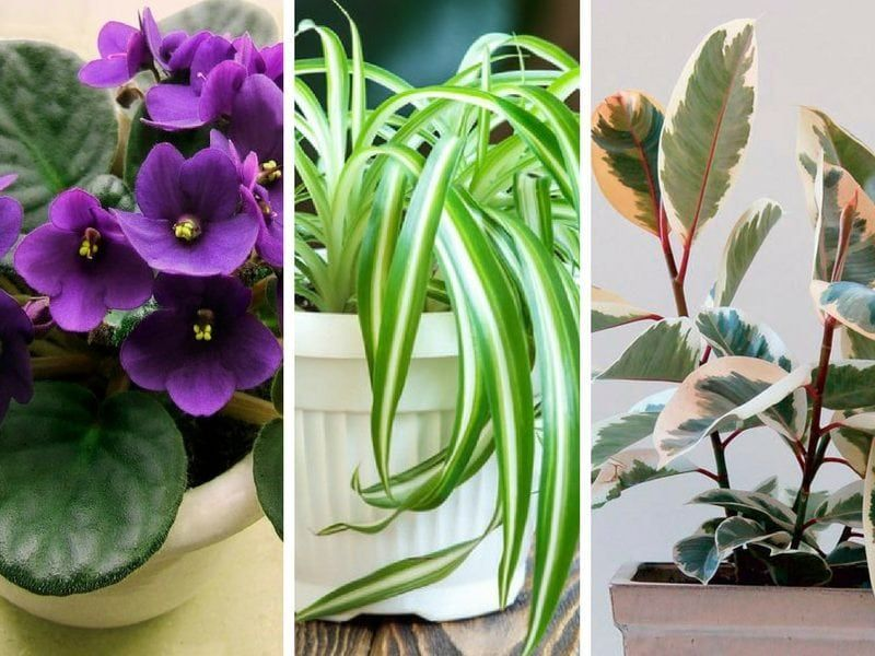 10 feng shui indoor plants to spruce up your interior