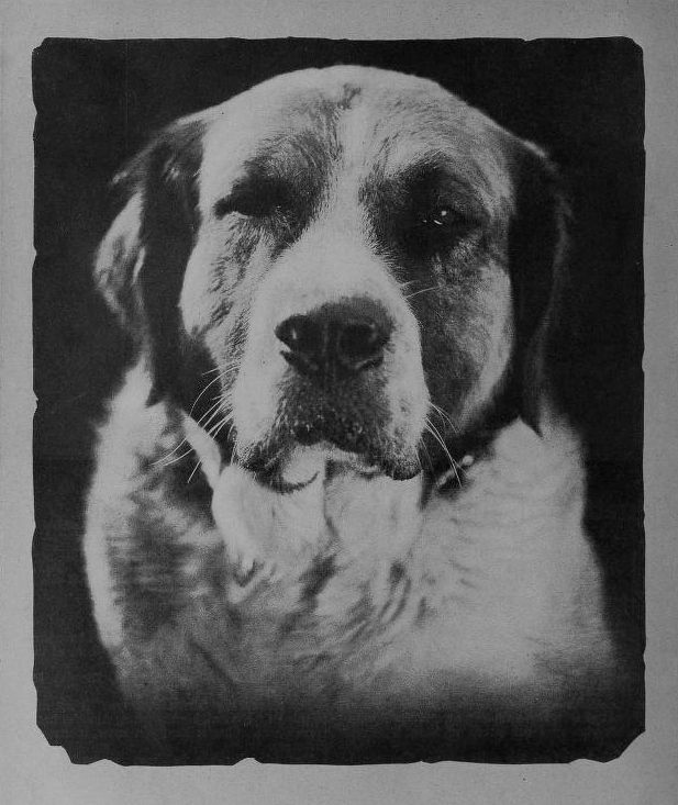 Picture Of Buck Dog In Silent Film The Call Of The Wild 1923 Call Of The Wild Buck Call Dogs
