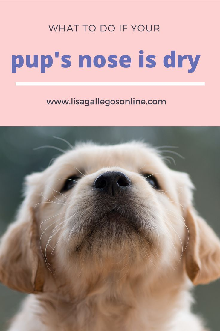 Pin On Dog Grooming And Hygiene