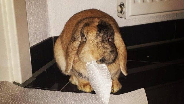 30 Mischievous Bunnies Who Have No Regrets About Taking Over Your House