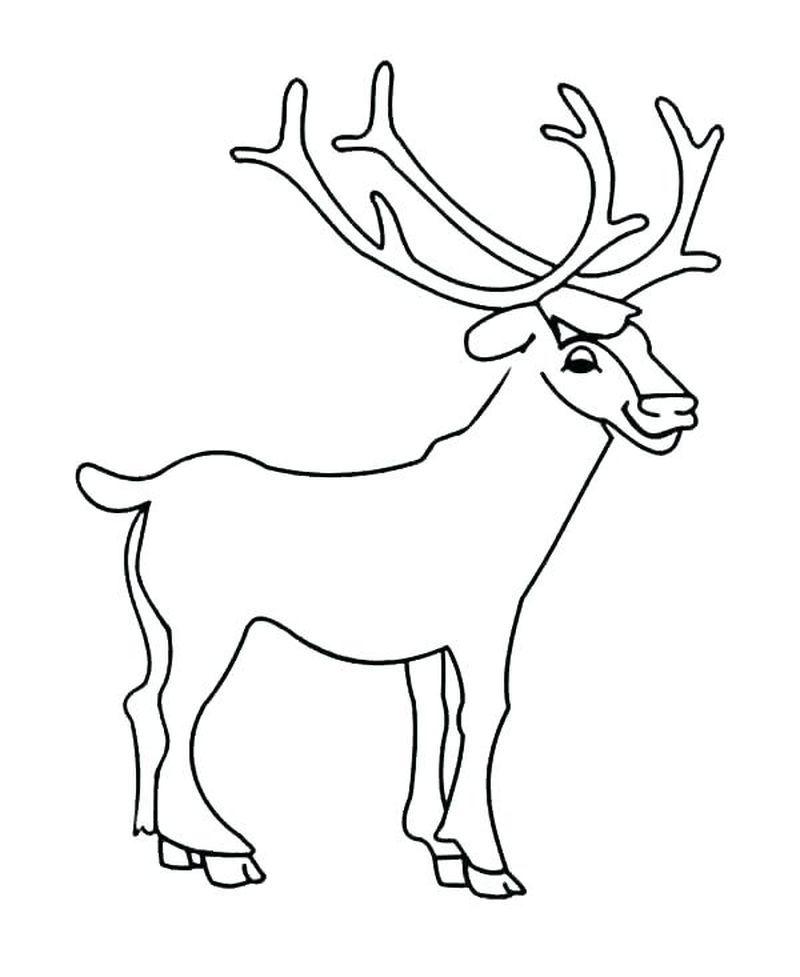 Printable Deer Coloring Pages Pdf Download Free Coloring Sheets Deer Coloring Pages Online Coloring Pages Animal Coloring Pages