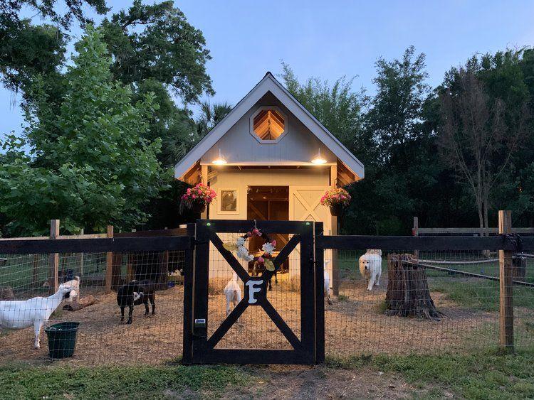Dwarf Goats — Fallen Oak Farms