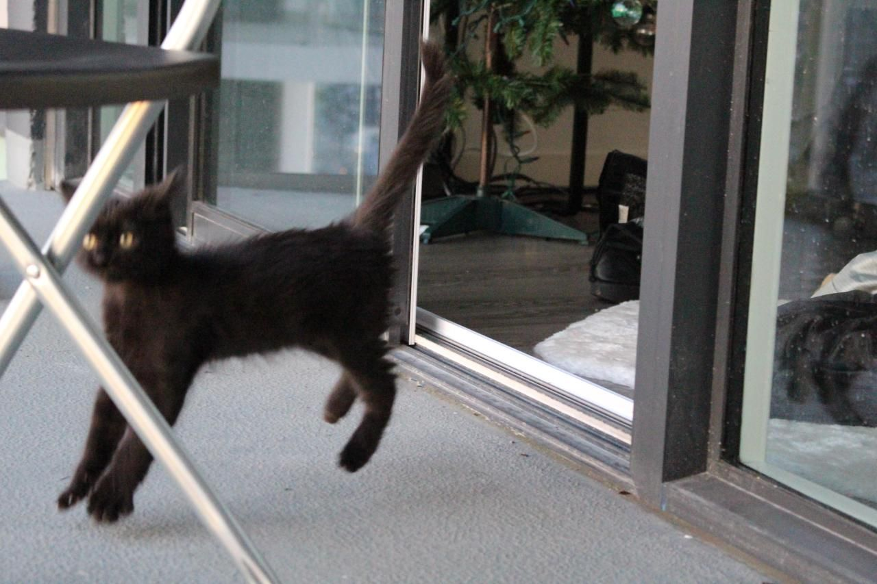 My Kitten Finally Got Brave Enough To Go Outside Today This Was His First Reaction To A Sound Source Http Bit Ly 2xr3lvh Therapy Cat Go Outside Kitten