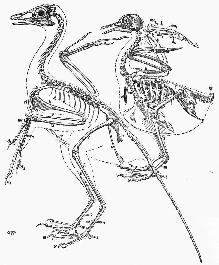 bird anatomy - Google 검색   Ref - Anatomy   Pinterest   Bird book ...