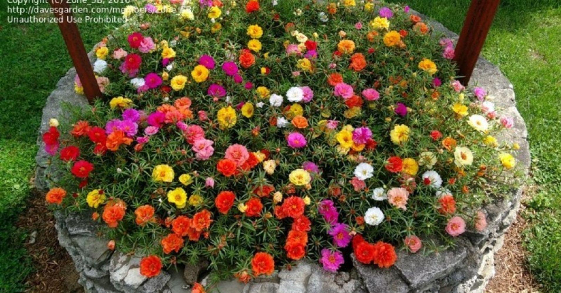 A legjobb alkalom növények vásárlására kertjében