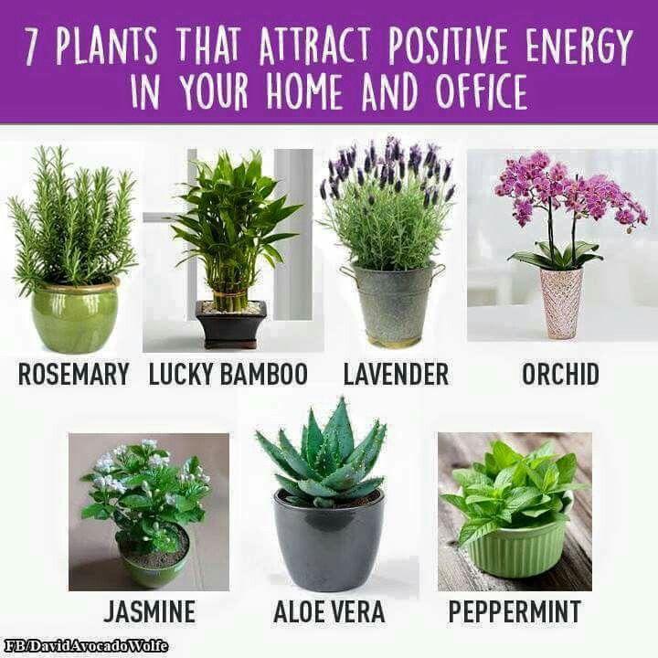 Positive Energy Plants | Plants, Inside plants, At home gym