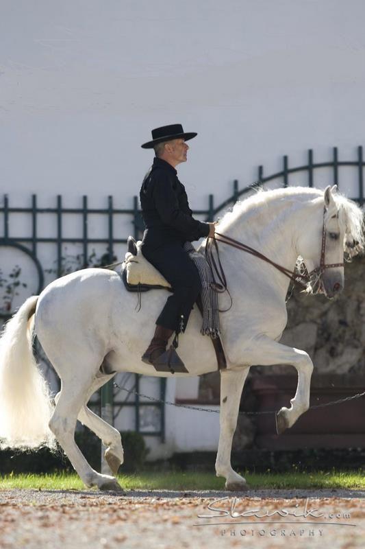 Andalusian - Piaffe