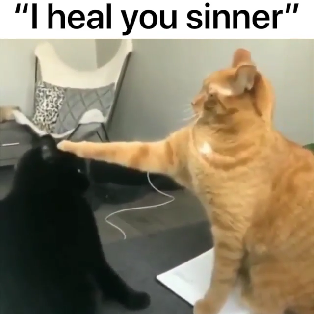 You are healed!  #cutecreatures #humor #funny #cat #cats #kitty #meow #kitten #kittens #cutecats #animal #animals #pet