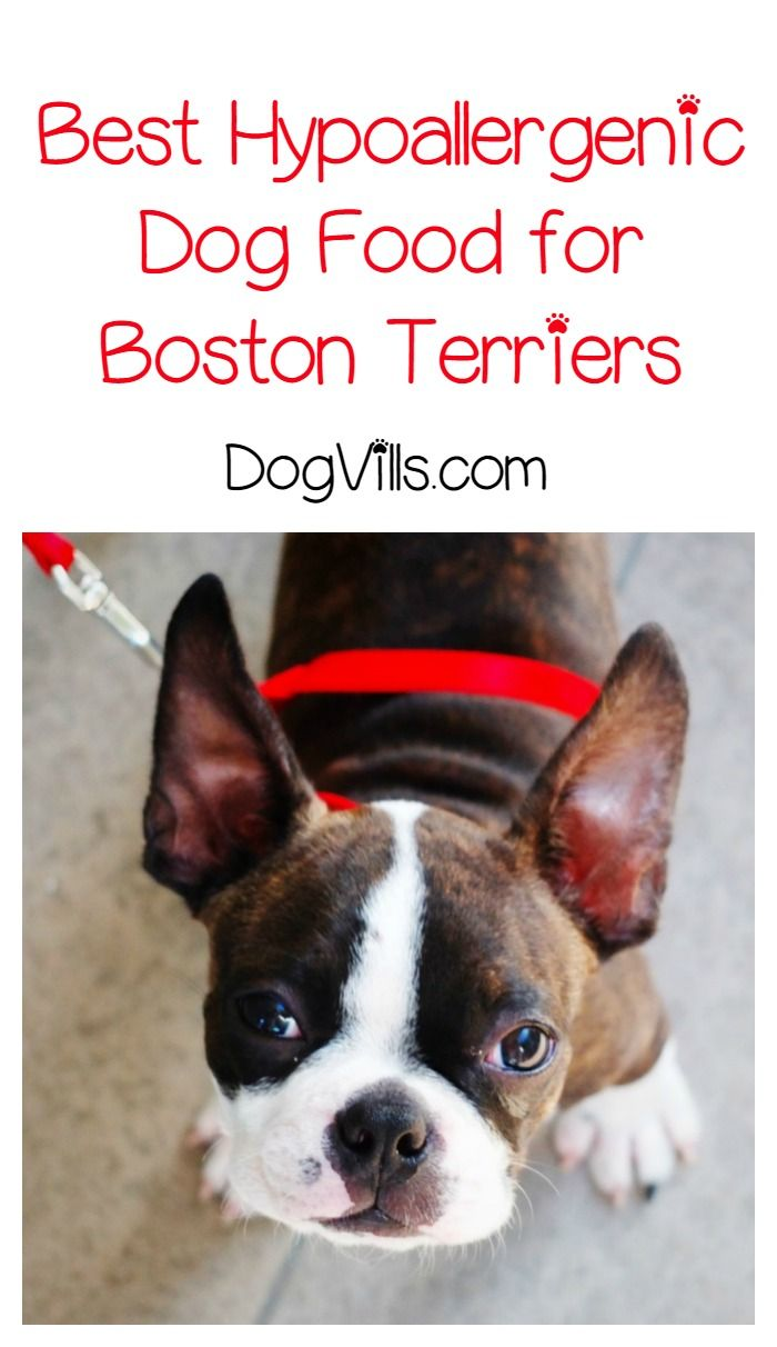 What Is The Best Hypoallergenic Dog Food For Boston Terriers Hypoallergenic Dog Food Best Hypoallergenic Dogs Dog Food Recipes