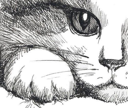 space cat art cat derweb pinterest space cat cat and spaces