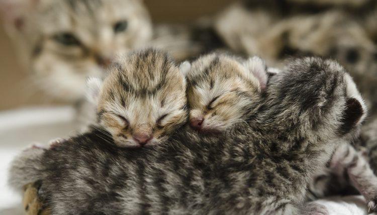 Is Diatomaceous Earth Safe For Newborn Kittens An Insight Look Cat Having Kittens Newborn Kittens Kitten Pictures