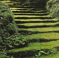 ♥ These mossy steps are straight out of a fairy tale, I adore the mystery of them. They appear almost sculptural and become an artform in themselves rather than just steps leading away somewhere.