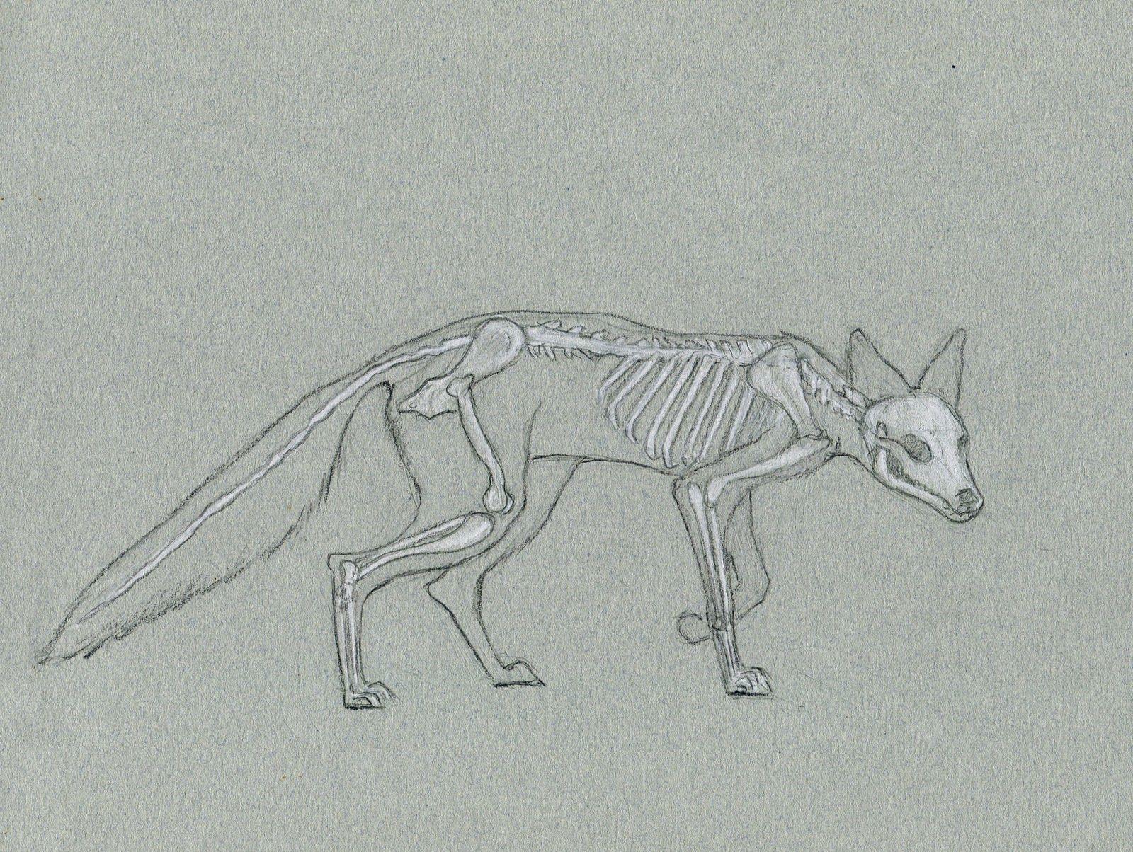 Alexis Demetriades Science Illustration Quick Skeleton Study Red