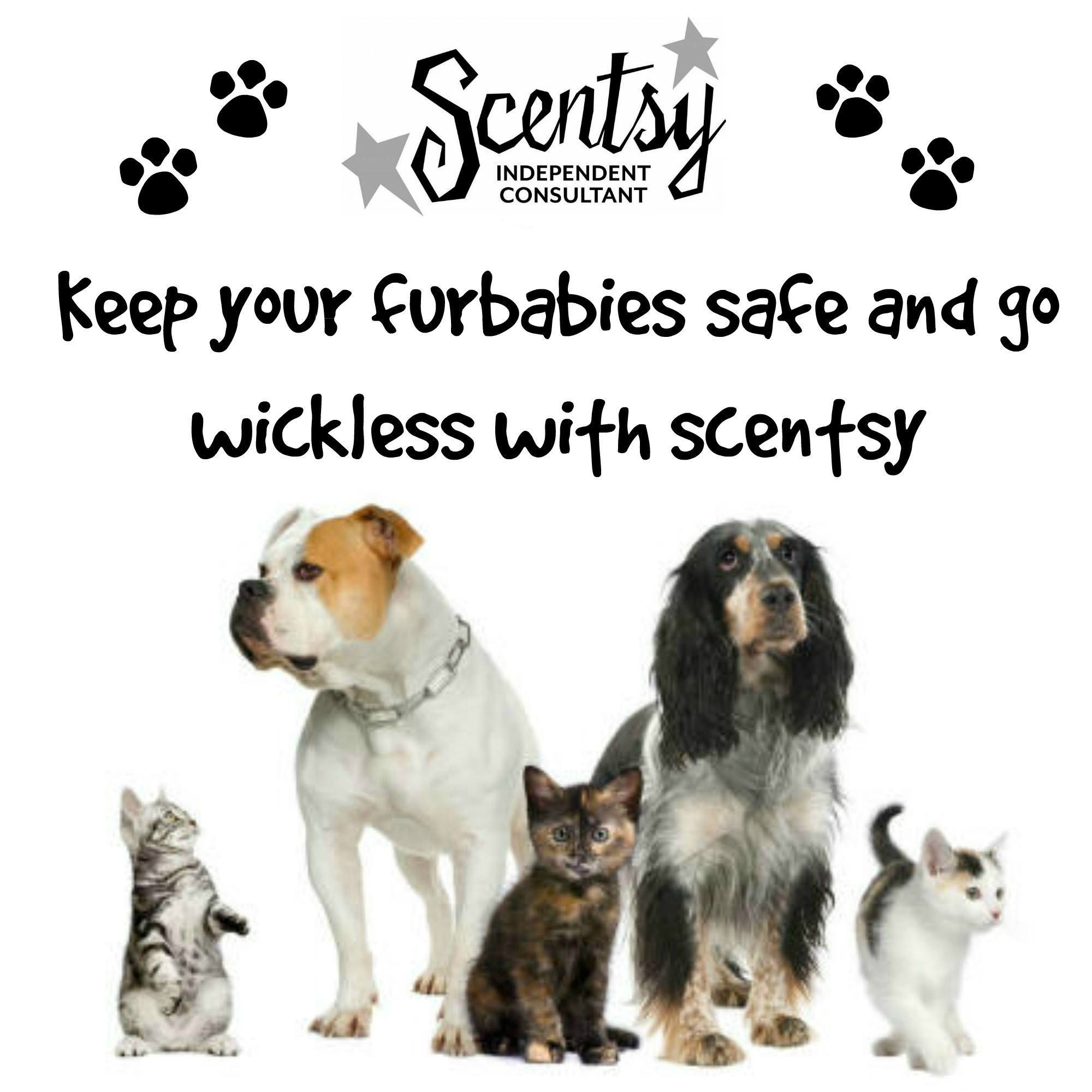 Scentsy is safe for Pets! http//Lindseyclark.scentsy.us