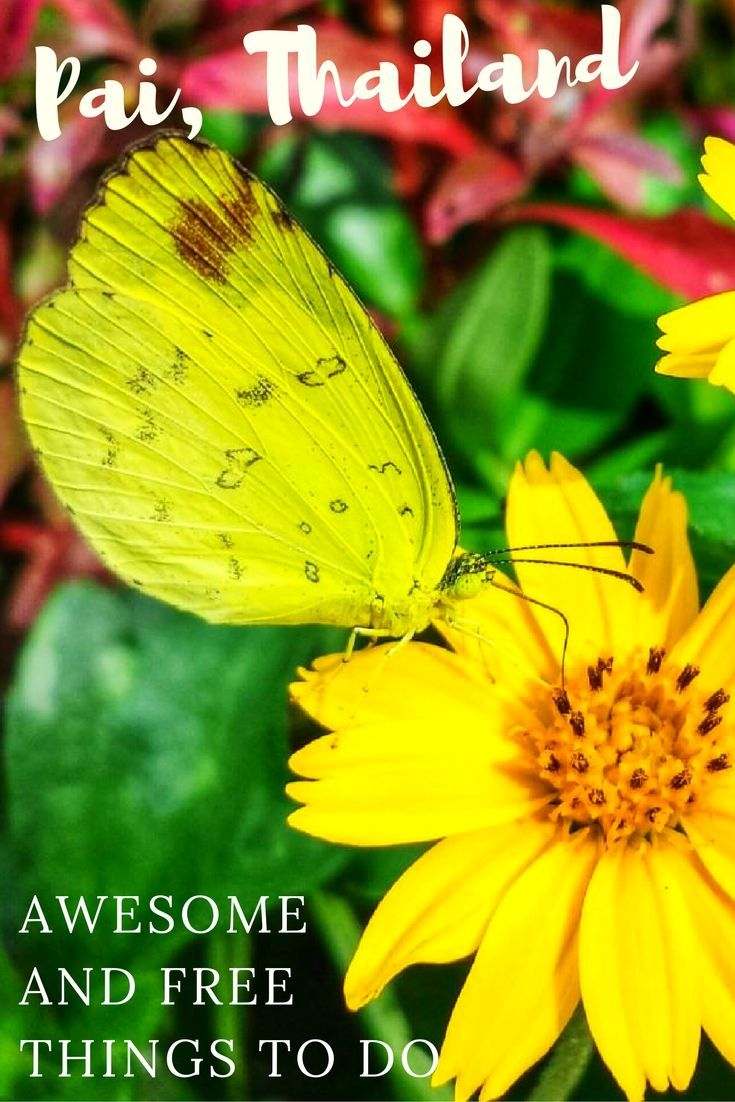 Awesome And Free Things To Do In Pai Pai Thailand Northern - Where is thailand located
