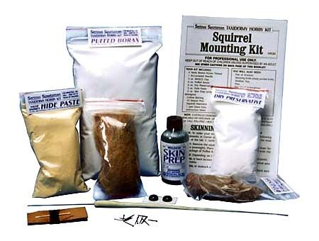 Squirrel taxidermy mounting kit fun with taxidermy pinterest do it yourself taxidermy solutioingenieria Images