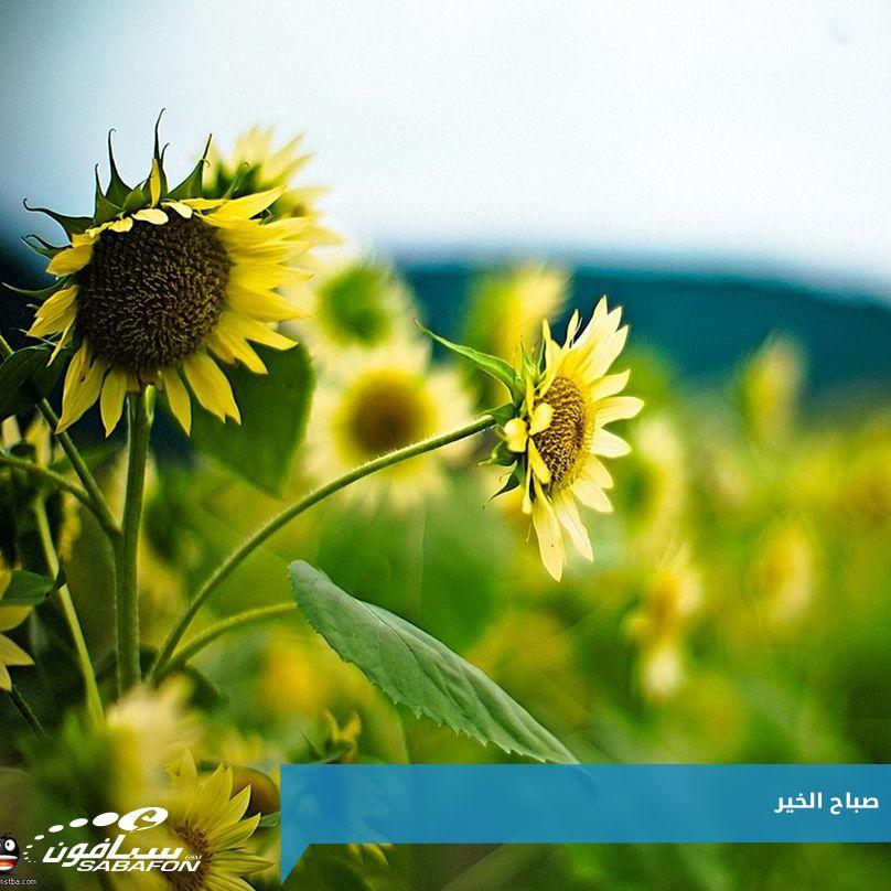 اللهم بارك لنا في يومنا هذا وأسعد قلوبنا برؤية من نحب وهم في أتم الصحة والراحة صباح الخير Plants Flowers Good Morning