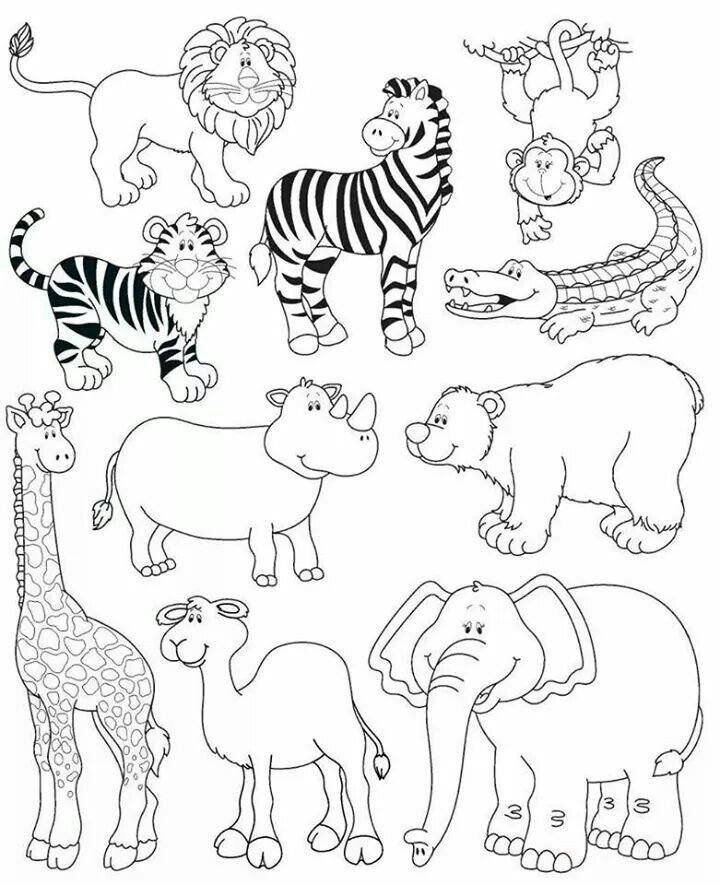 Animales De La Selva Vocabulario Animales Salvajes Dibujos