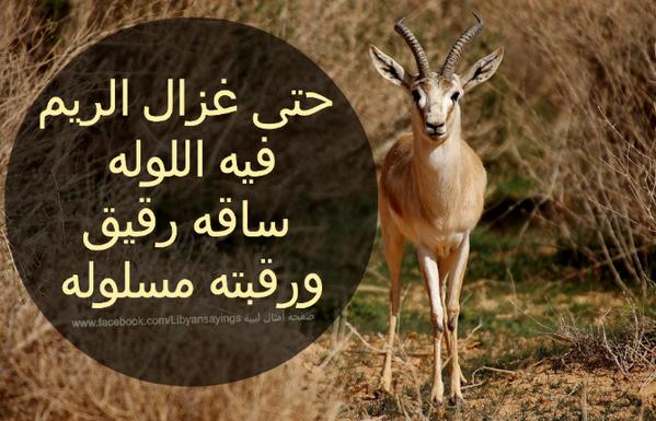 غزال الريم Libya