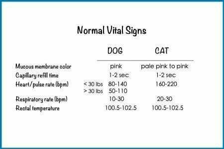 Normal Vitals | veterinary skills | Vet clinics, Vet tech ...