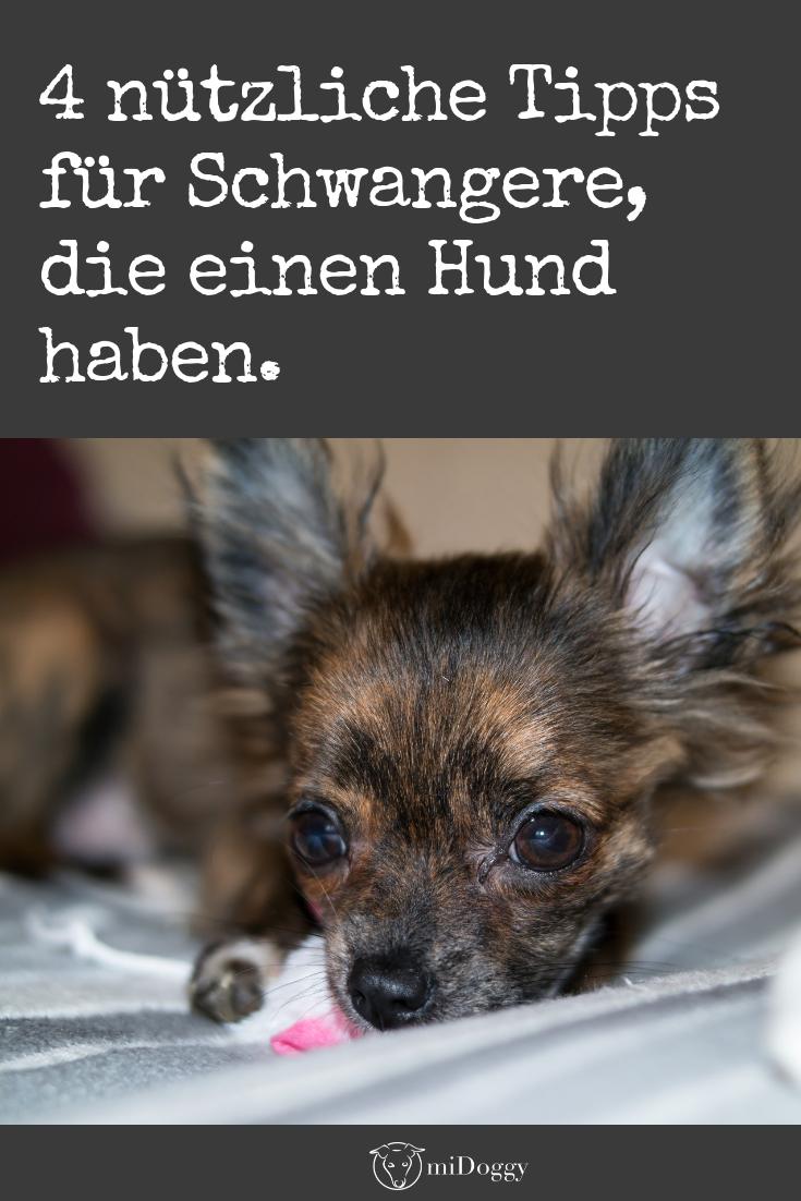 SCHWANGER MIT HUND Hunde, Welpen und Hundeverhalten