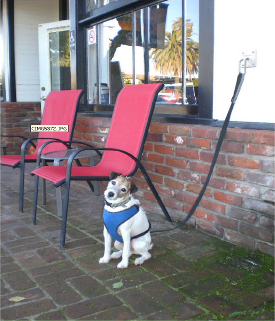 A Doghook Being Used Outside A Coffee Shop Love Pet Friendly Establishments Pet Safety Dog Hitch Dog Leash Hook