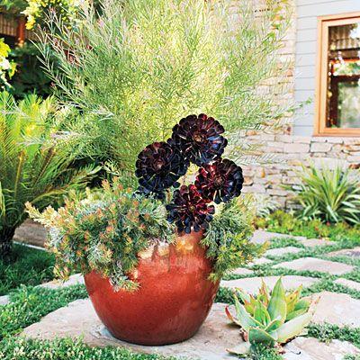 14 Low Water Container Plants Drought Tolerant Plants