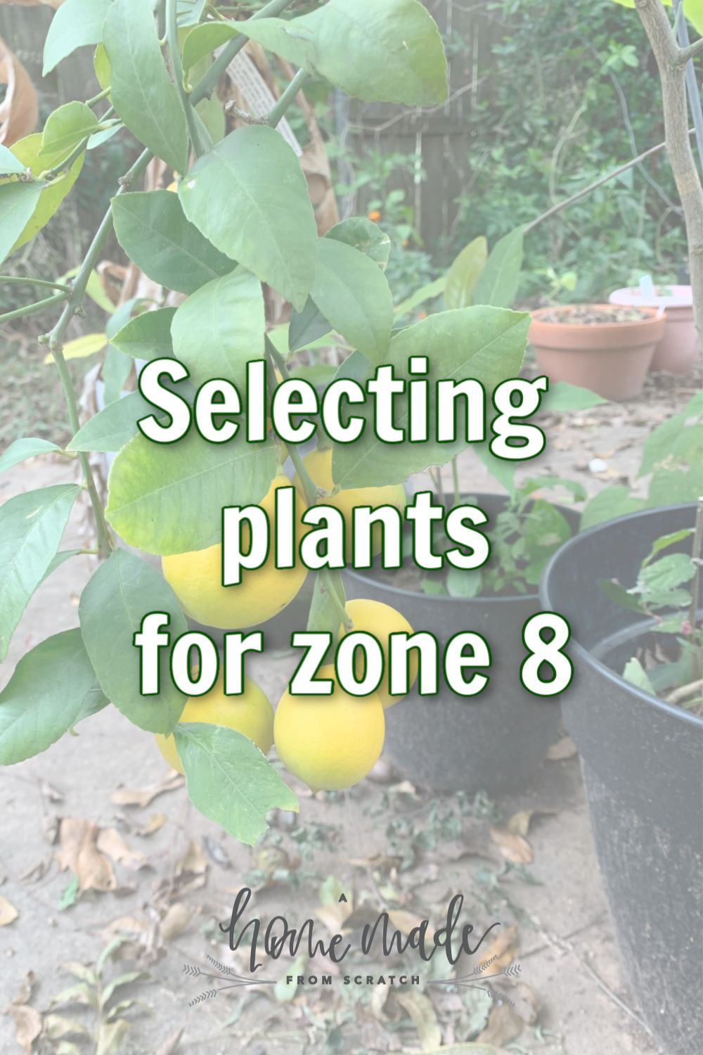 Selecting Plants for Zone 8 Plants, Fall crops