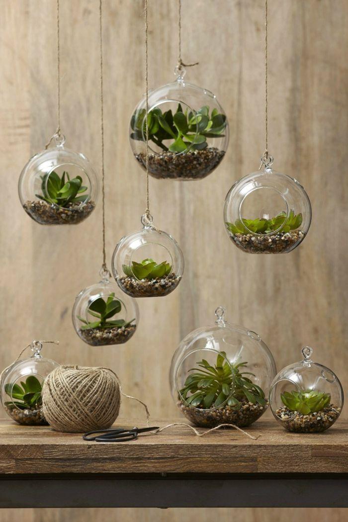 Sukkulenten Zimmerpflanzen sukkulenten zimmerpflanzen glas terrarium deko diy blumen und