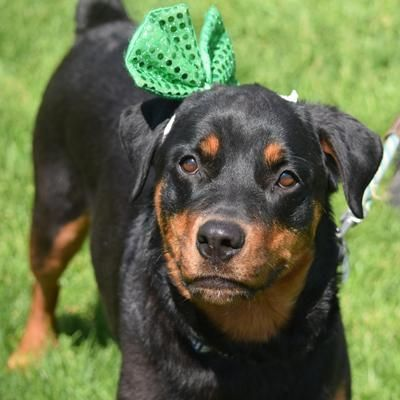 Adopt Roxy On