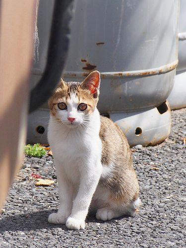 #cat#cats#kitten#kityy