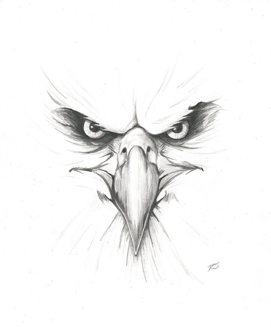 Eagle head tattoo eagle tattoos head tattoos face drawings tattoo drawings