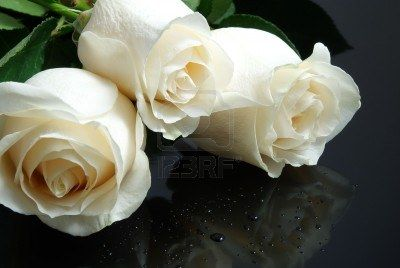 three white roses with waterdrops on black background