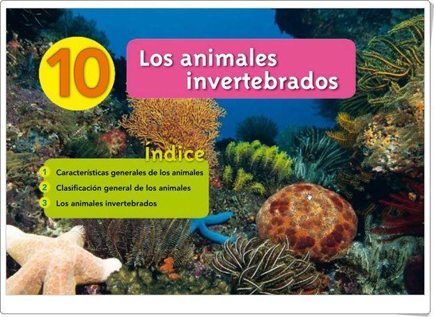 Unidad 10 De Biología Y Geología De 1º De E S O Los Animales Invertebrados Clase De Biología Biología Animales Invertebrados