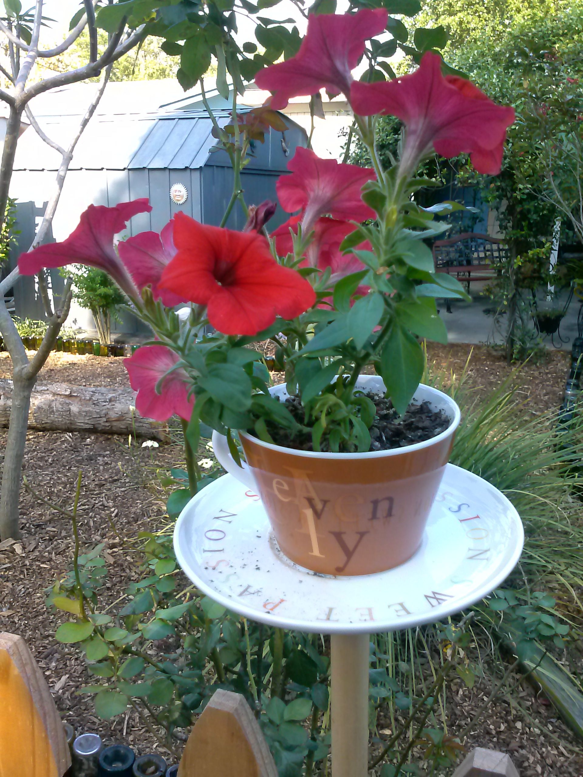 Petunias Are Full Sun Flowers It Blooms In Spring Summer And Fall