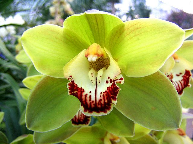 Green Orchid Green Orchid Beautiful Flowers Orchid Potting Mix