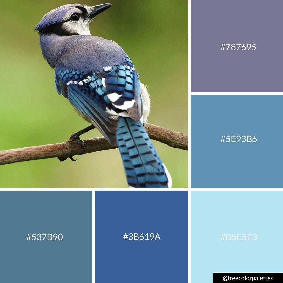 Blue Jay Birds Color Palette Inspiration Digital Art And Brand