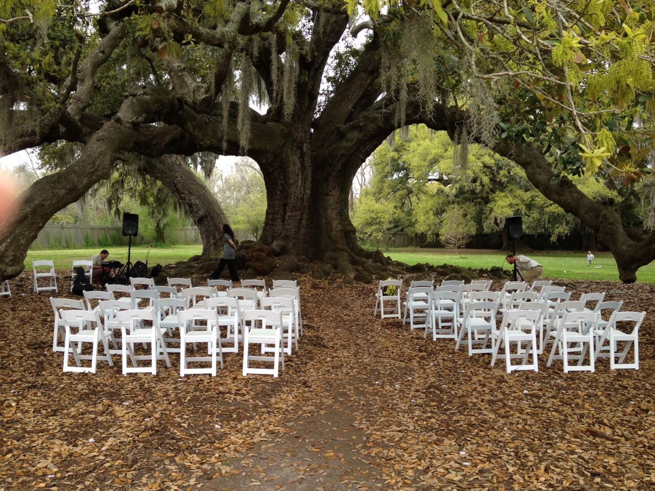 Tree of Life in Audubon Park. New Orleans, LA Our wedding