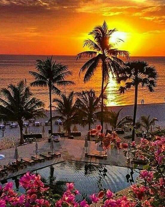 ان القسوة المتكررة تقتل بذور الحب فى تربة القلب مع الايام فلا تلبث ازهارة ان تجف وتتساقط ولا يبقى فيها بعد ذلك سوى المر Amazing Nature Beautiful Nature Sunset