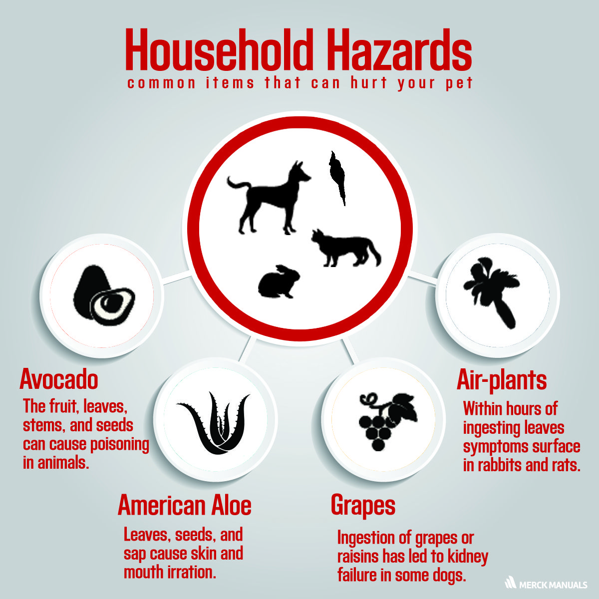 learn more about common pet household hazards merck veterinary rh pinterest com Veterans Guide VRA Eligibility