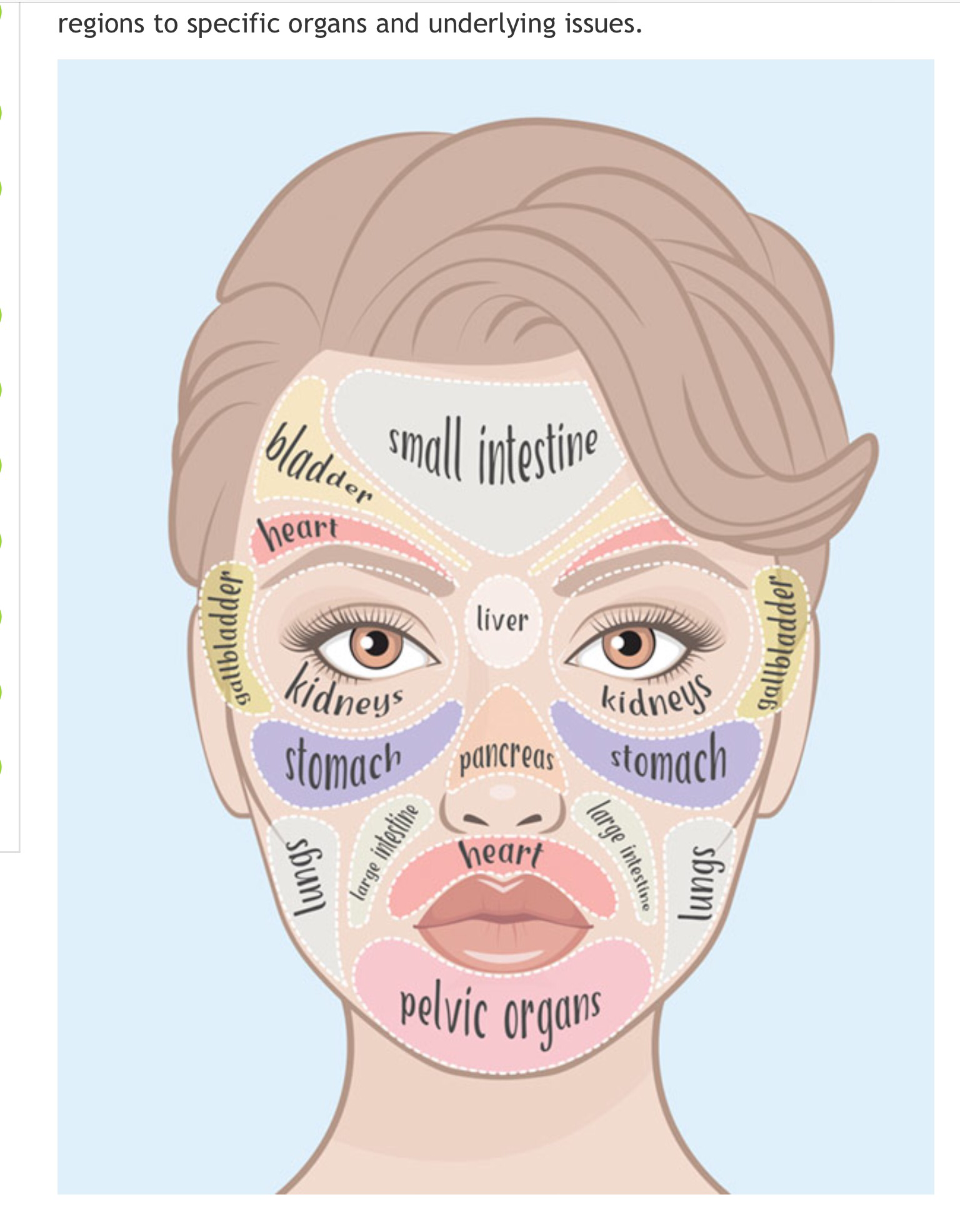 As The Largest Organ Of The Body The Skins Primary Function Along - Acne face map organs