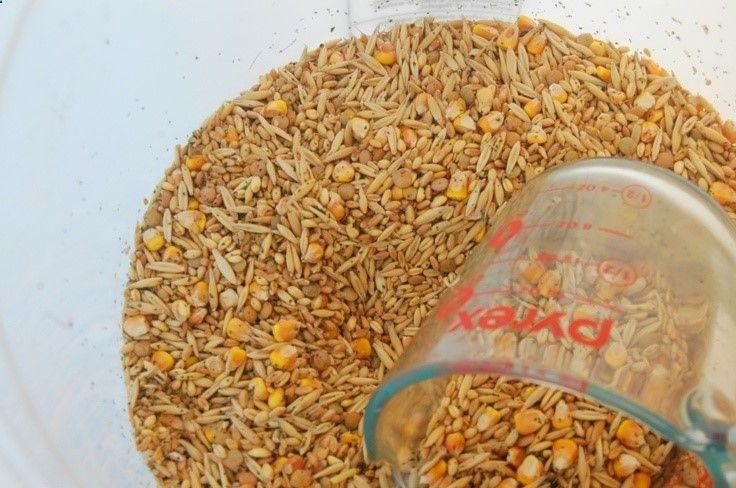 Homemade Chicken Feed Farm Dreams Organic Chicken Feed