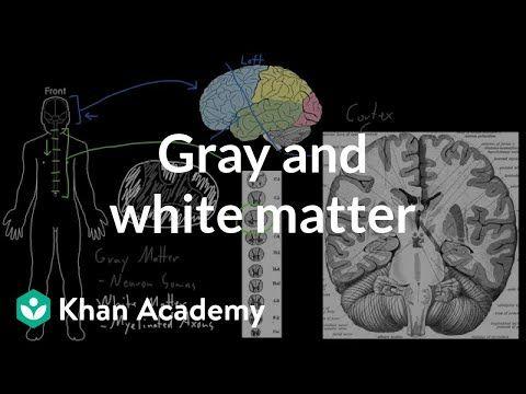 Gray and white matter | Organ Systems | MCAT | Khan Academy