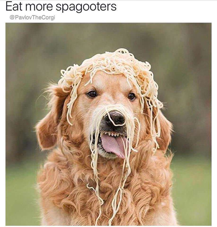 yay sphaghetti dog meme - Google Search | Sweet memes ...