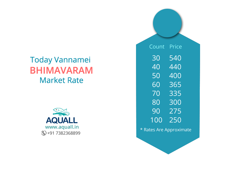 Present Vannamei market price in Bhimavaram, AP, India  #aquall